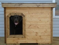 Packer - Delaware:  several years of being tried and tested, this dog house has been proven to be the most comfortable and the safest home you can build for your beloved dog.