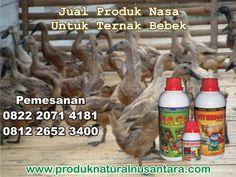 jual-produk-nasa-untuk-ternak-bebek-pedaging-dan-petelur-viterna-poc-nasa-hormonik-distributor-agen-stokist-stockist-resmi-natural-nusantara
