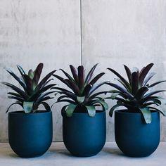 Straight Up Pots by The Balcony Garden | Garden Pots | Pot Plants | Planters | Flower Pot| Designer Pots