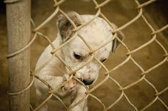 Why penned up? Animal Shelter, Animal Rescue, Texas Animals, Puppy Mills, Animal Control, Animal Rights, Rescue Dogs, I Love Dogs, In This World