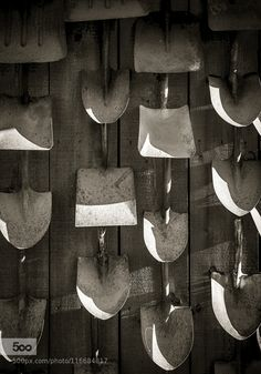 A Major Undertaking - Pinned by Mak Khalaf A collection of shovels decorates an old barn wall at the goldfield Ghost Town in Apache Junction Arizona. The late afternoon sun falling on the blades of the shovels combined with the geometry of the shovels and the texture of the blades and the barn wall made an interesting composition. Black and white seemed the right way to go and the sepia toning was used to add an antique touch. I hope you like it! Fine Art Barnsepiashovelswallwestern by…
