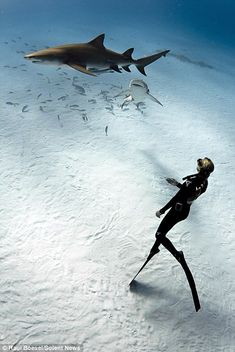 A diver swims with the sharks | only in the bahamas | beautiful clear waters and white sand