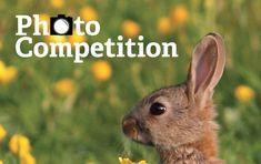 Wildlife Photo Contest Series for International Photographers