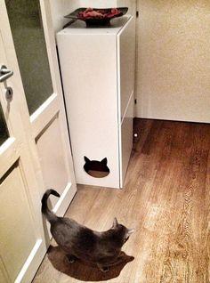when to litter train kittens