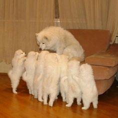 Mom! Mom! Mom!