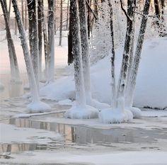 Winter wonderland, snow, white.