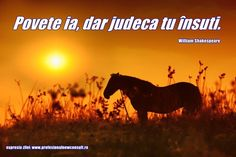 Un gând !  echipa : www.profesionalnewconsult.ro Photo Illustration, Advice, Horses, Quotes, Movie Posters, Animals, Bead, Quotations, Animales