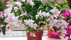 Nápady a Tipy House Plants, Garden Plants, Planting Flowers, Flora, Home And Garden, Advent, Gardening, Hacks, Plants