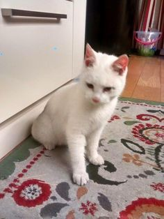 Found – female cat has been taken to the vets not micro-chipped she is 8 months old and deaf, she was found on Clonsilla Road Blanchardstown, Ireland.