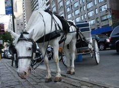 BONDE DA BARDOT: Agora é Lei: Uso de animais para trasporte é proibido no Estado do Rio de Janeiro