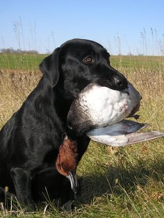 Think you might want to try duck #hunting? Click the picture to see how to start.
