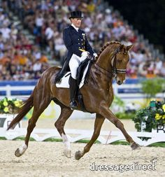 A beautiful Hanoverian breed of horse competing in the world of Olympic level dressage.