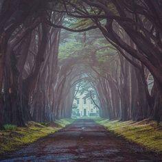 Fairytale. Point Reyes California. Photo by: @gettyphotography #EarthFocus by earthfocus
