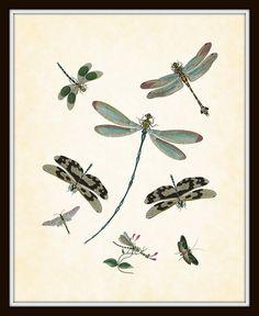 Vintage Dragonfly Plate 1 Art Print 8 x 10 Digital Collage Home Decor Garden Natural History Art
