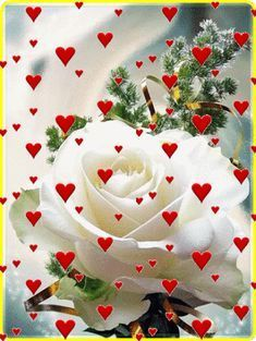 Pin by iêda on frases bom dia com flores, bom dia rosa, imag Rose Flower Wallpaper, Flowers Gif, Love Wallpaper, Beautiful Flowers Wallpapers, Beautiful Rose Flowers, Love Rose, Love You Gif, Love You Images, Beautiful Love Pictures