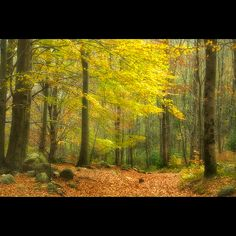 Enchanted Forest by christian