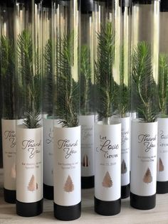 Let love grow wedding favor white pine seedling wedding favor spruce seedling wedding favor rustic wedding favor bridal shower favor 60 unique ways to use potted plants in your wedding Rustic Wedding Favors, Wedding Favors For Guests, Plant Wedding Favors, Nautical Wedding, Best Wedding Favors, Wedding Invitations, Wedding Plants, Lake Wedding Decorations, Wedding Centerpieces
