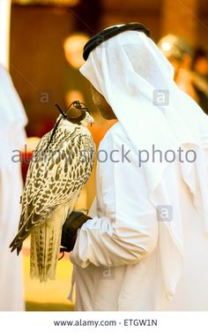 Emiratee and Saker Falcon at international falconry festival in Abu Dhabi Stock Photo