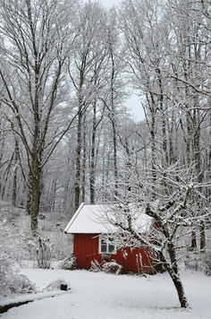 red shed in winter