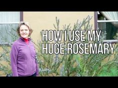 How I Use My Huge Rosemary - for cooking, in flower arrangements, as a hair rinse & more