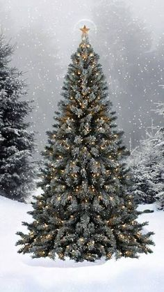 Beautiful Christmas tree in the snow Christmas Scenes, Noel Christmas, Merry Little Christmas, Country Christmas, Christmas Pictures, Winter Christmas, Christmas Lights, Vintage Christmas, Christmas Decorations