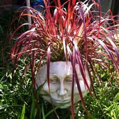 My new face planter. Face Planters, Flower Planters, Garden Planters, Flower Pots, Planter Pots, Succulent Gardening, Container Gardening, Garden Center Displays, Garden Mirrors