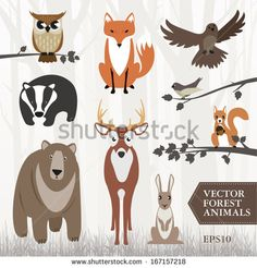 Set of vector illustrated forest animals - stock vector