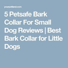 5 Petsafe Bark Collar For Small Dog Reviews | Best Bark Collar for Little Dogs