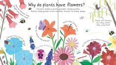 """How do flowers grow?"" at Usborne Children's Books"