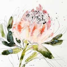 Researching flowers for an upcoming project and learned that the King Protea represents hope. Beautiful flower and meaning Flor Protea, Protea Art, Watercolor Flowers, Watercolor Paintings, Watercolours, Illustrations, Illustration Art, Art Aquarelle, Australian Art