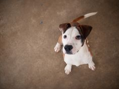 nick D A P S Shelter Dogs, Animal Shelter, Animal Protection, Dog Pictures, Animals, Animal Shelters, Animales, Animaux, Animal