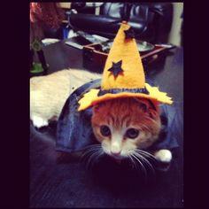 My Halloween costume.