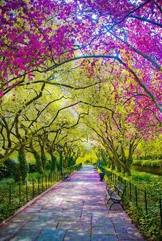 Beautiful Central Park, New York City...wouldn't mind taking a stroll through here