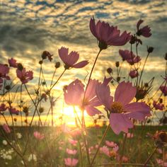 Beautiful Flowers, Beautiful Pictures, Buick Riviera, Kitchen Pictures, Spring Fever, Our World, Doterra, Cosmos, Flower Power