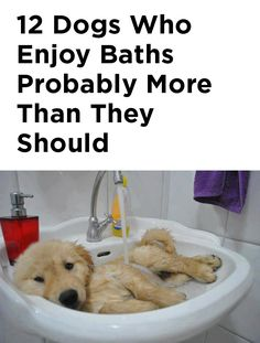 These are cute beyond words!!! :) http://theilovedogssite.com/12-dogs-who-enjoy-baths-probably-more-than-they-should/