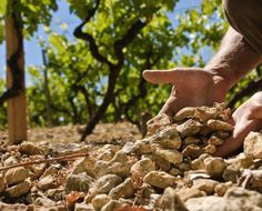 http://winechef.com.br/blog/