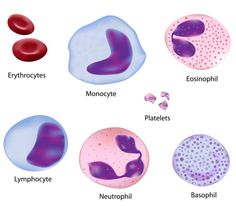 physical appearance of human red blood cells, white blood cells, and platelets under a microscope