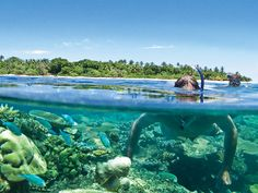 Stay at the luxurious Vomo Island Resort, Fiji in Mamanuca Islands, Fiji, and work with a Virtuoso travel Advisor to receive your free upgrades and amenities. Best Resorts, Hotels And Resorts, Fiji Airways, Fiji Honeymoon, Visit Fiji, Fiji Beach, Sports Nautiques, Honeymoon Packages, Holiday Resort