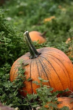 Why eat pumpkin? This iconic autumnal gourd is packed with nutrients like beta-carotene and vit. Plus, pumpkin puree makes a great fat subsitute w. Harvest Time, Fall Harvest, Bountiful Harvest, Harvest Moon, Autumn Day, Autumn Leaves, Happy Fall Y'all, Samhain, Mabon