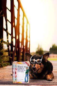 Pregnancy Announcement Idea with Dog  Copyright Laine Images Photography Salt Lake City UT
