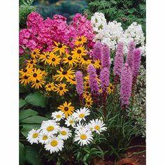 Bloomsz Four Great Sun Garden Perennial Collection, Flower Bulb, Roots / Flower Bulbs 4pk