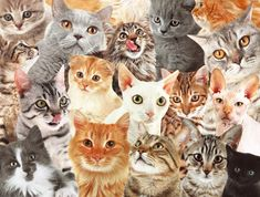 Shelter Cat Adoption Tips for National Adopt A Shelter Cat Month