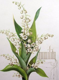 1848 LILY of the VALLEY - HUMILITY - Owen Jones - Original Antique Colour Printed Classic Botany Flower Flora