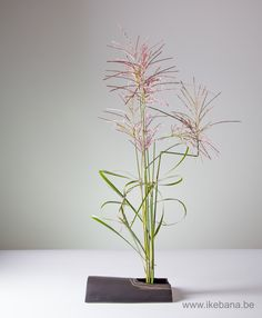 Ikebana with one kind of material. Click and Subscribe to our newsletter: www.ikebana.be/newsletter
