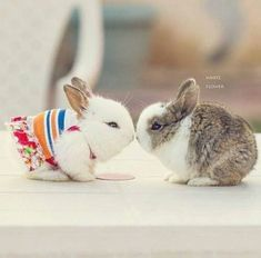 Taking Care Of Rabbits. Photo by karamsingh Rabbits can be cute and gentle pets but caring for them will require an understanding of their behavior. These soft and lovable animals Cute Baby Bunnies, Funny Bunnies, Cute Babies, Tiny Bunny, Animals And Pets, Funny Animals, Cute Little Animals, Tier Fotos, Hamsters