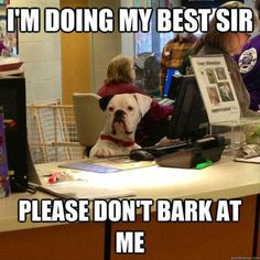 I'm doing my best dog secretary