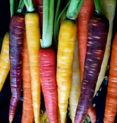 Rainbow carrot mix...multi colored