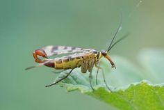 Insekten - leiflight- Fotografie @ life