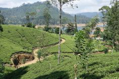 Video: A trip through the fantastic Sri Lanka countryside - Globesnail #travel #trip #srilanka #countryside #happypeople #asia #poor