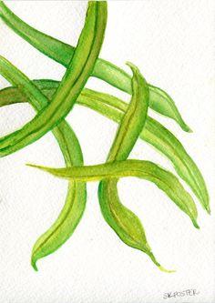 Green Beans watercolors paintings Original  by SharonFosterArt